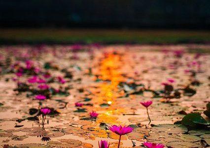 SR lotus